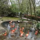 Pairi Daiza bezoeken, een unieke dierentuin en park