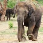 Naar Thailand? Alternatieven voor rijden op een olifant
