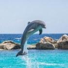 Zwemmen met dolfijnen in Californië en Las Vegas