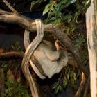 Avond in Dierenpark Emmen: breng de dieren naar bed