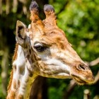 Burgers Zoo is een dierenpark met diverse ecodisplays