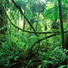 Met een Marron door het oerwoud van Suriname
