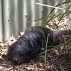 Tasmanië: Hobart, Richmond en Bonoro Wildlife Sanctuary