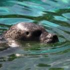 Zeehonden spotten in Zeeland