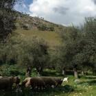 Molise, een authentieke streek in Italië