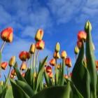 7 topbezienswaardigheden in Nederland
