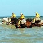 Garnalen vissen op een paard in zee; uniek in de wereld!