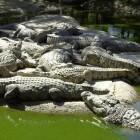 Everglades: tien mooie plekjes die je niet mag missen
