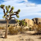 Joshua Tree National Park Californië: 7 bezienswaardigheden