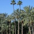 Elche(ELX): oude stad van palmen, traditie en feesten