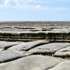 Rondvaart Oosterschelde naar nieuwe methode oesterkweek