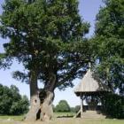 De Kroezenboom: een beschermende boom