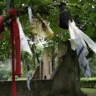 Koortsboom: bezieling van een eeuwenoude eik