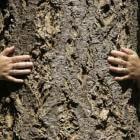 Bostochten: stilstaan bij bomen