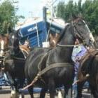 Paardenreddingboot van Ameland - met demonstratieschema