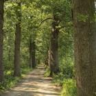 Het Utrechtpad etappe 6: Scherpenzeel – Amersfoort