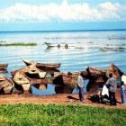 Buggala Island – Eiland in het Victoriameer