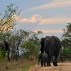 Zelf op safari in het Krugerpark van Zuid-Afrika