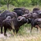 Zelf op safari in het Krugerpark te Zuid-Afrika