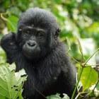 Regio Centraal-Afrika: landen, landschappen en gebieden