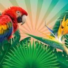 10 tips voor als je naar de tropen gaat