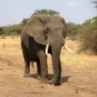 Alles wat je wilt weten over Kenia