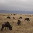 Serengeti, vlakte zonder einde