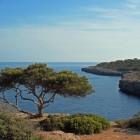 Mallorca, eiland voor de ontdekker