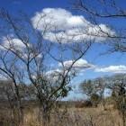 Kruger nationaal park, de geschiedenis