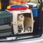 Exporteisen huisdieren naar Verenigd Koninkrijk aangepast