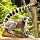 Toerisme in Madagaskar