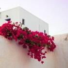 Griekse eilanden: Vakantie en reizen eilanden Griekenland