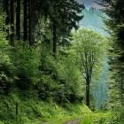 Schwarzwald, of Zwarte Woud
