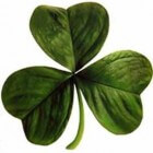 Saint Patrick's Day of Paddy's Day in Ierland en New York