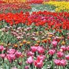 Floriade; Het om de 10 jaar terugkerende tuinevenement