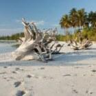 Zanzibar; Parel in de Indische Oceaan - Reisverslag