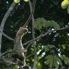 Nationale Park Manuel Antonio – Costa Rica