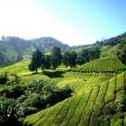 Maleisië rondreis deel 5: Kota Baru en de Cameron Highlands