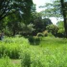 De Botanische Tuin van Wenen is een rustpunt in de stad