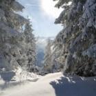 Diedamskopf - skigebied in Vorarlberg voor de hele familie
