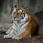 Burgers Zoo: adres, openingstijden en korting