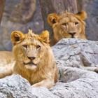 Safaripark Beekse Bergen: adres, openingstijden en korting