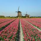 Waarom kiezen Chinese toeristen voor Nederland