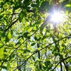 Weekendje weg in de Belgische Ardennen: Vielsalm
