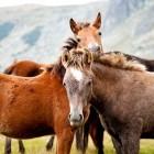 Ponykamp met eigen verzorgpony