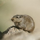 Hantavirus: reisadvies Yosemite National Park