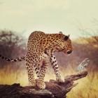Oostkust van Zuid-Afrika: Krugerpark tot St Lucia Wetlands