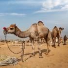 Met kinderen op vakantie naar Tunesië
