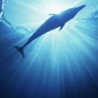 Tadoussac: de ideale plaats om walvissen te spotten